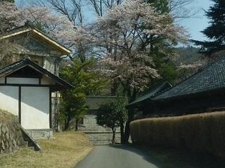 P1050937sakura.jpg